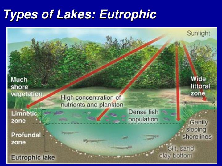 Types of Lakes: Eutrophic