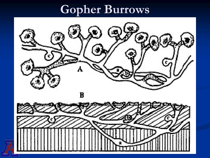 Gopher Burrows