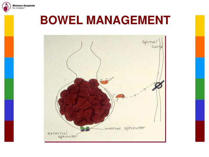 Ppt Management Of The Neurogenic Bowel Powerpoint