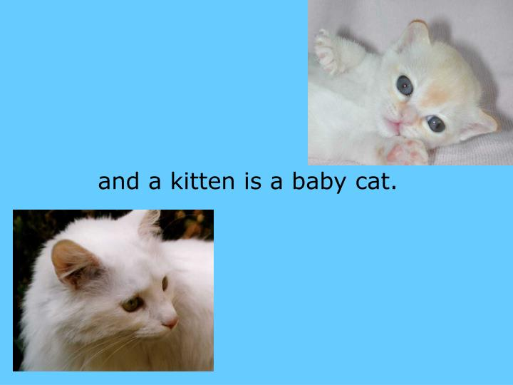 and a kitten is a baby cat.