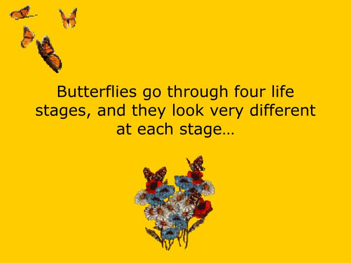 Butterflies go through four life stages, and they look very different at each stage…