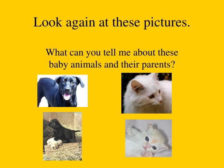Look again at these pictures.