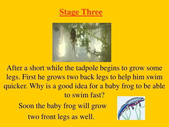 Stage Three