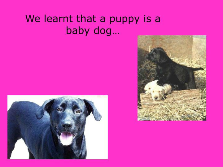 We learnt that a puppy is a baby dog
