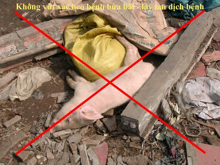 Không vứt xác heo bệnh bừa bãi - lây lan