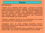 boripar15