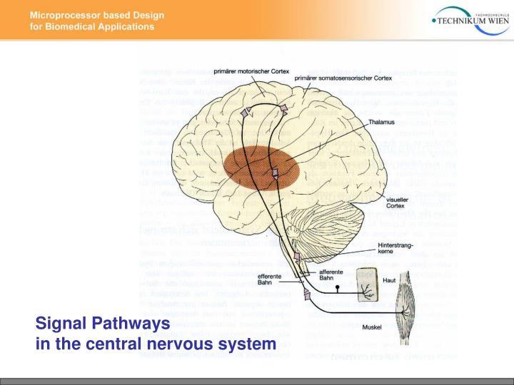 Signal Pathways