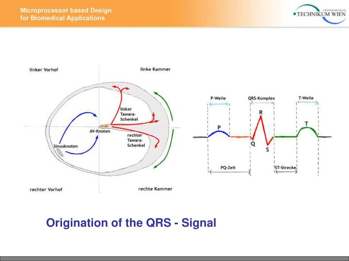 Origination of the QRS - Signal