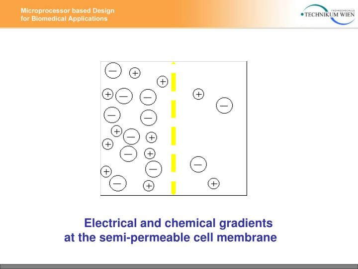 Electrical and chemical gradients