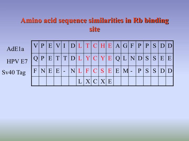 Amino acid sequence similarities in Rb binding site