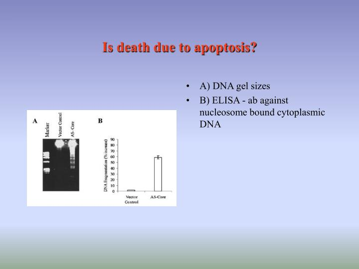 Is death due to apoptosis?