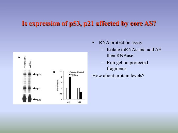 Is expression of p53, p21 affected by core AS?