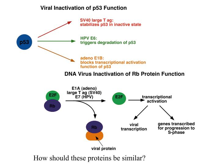 How should these proteins be similar?