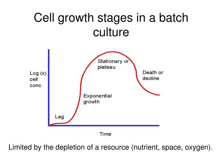 Cell growth stages in a batch culture