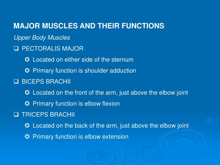 MAJOR MUSCLES AND THEIR FUNCTIONS