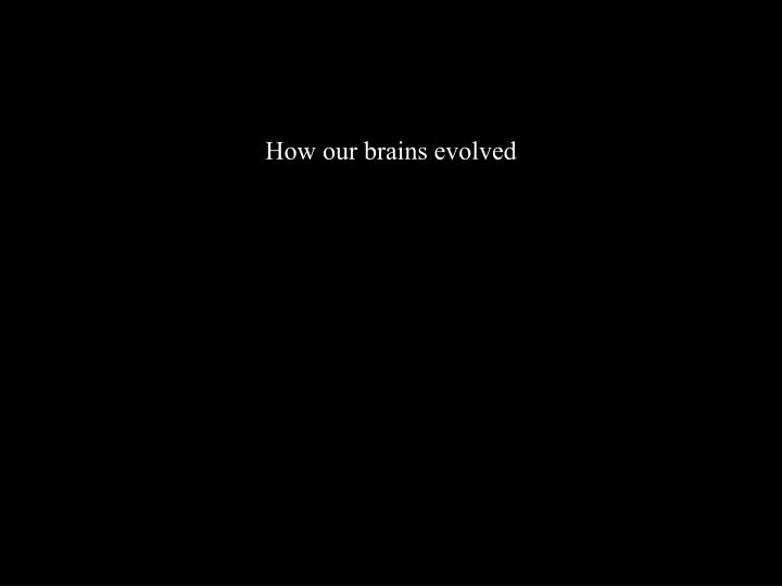 How our brains evolved
