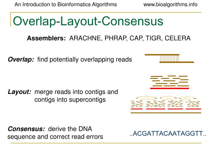 Overlap-Layout-Consensus