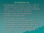 acinetobacter sp