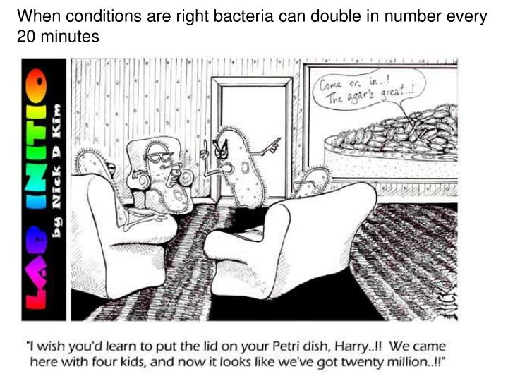When conditions are right bacteria can double in number every 20 minutes