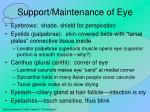 support maintenance of eye
