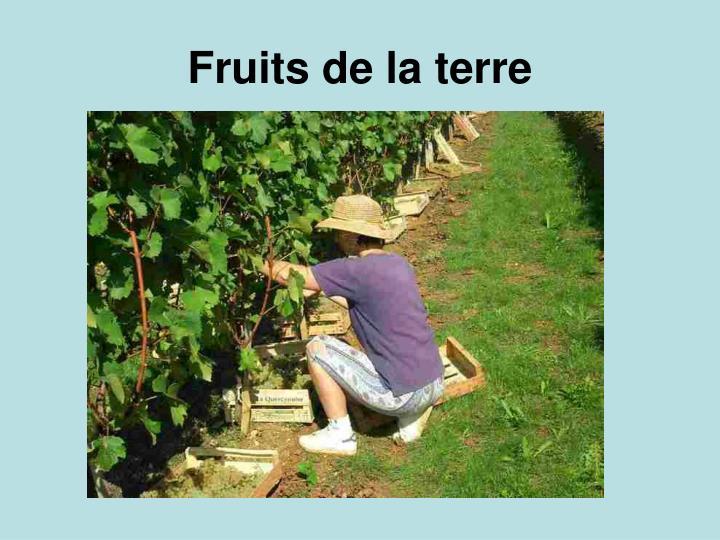 Fruits de la terre