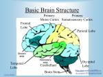 basic brain structure