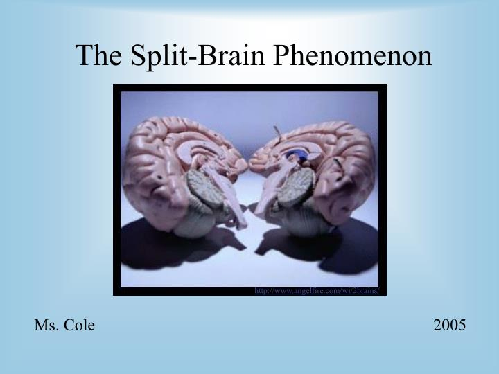 the split brain phenomenon