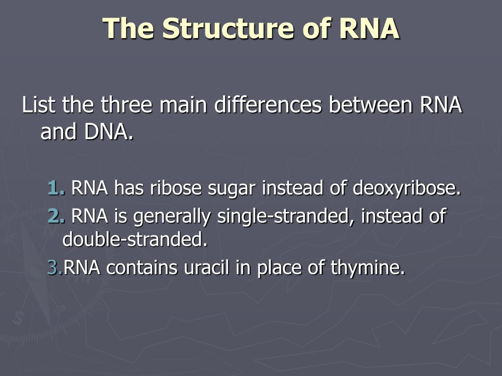 PPT - RNA and Protein Synthesis PowerPoint Presentation ...