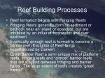 reef building processes