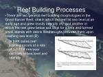 reef building processes2