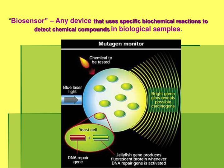 biosensor essay Free essay: | acc 2903value added programme 2name: tan min hui (15sat075b)tutor: dr lee chien in a nutshell, biosensors drives its revenue through licensing technologies, joint ventures.