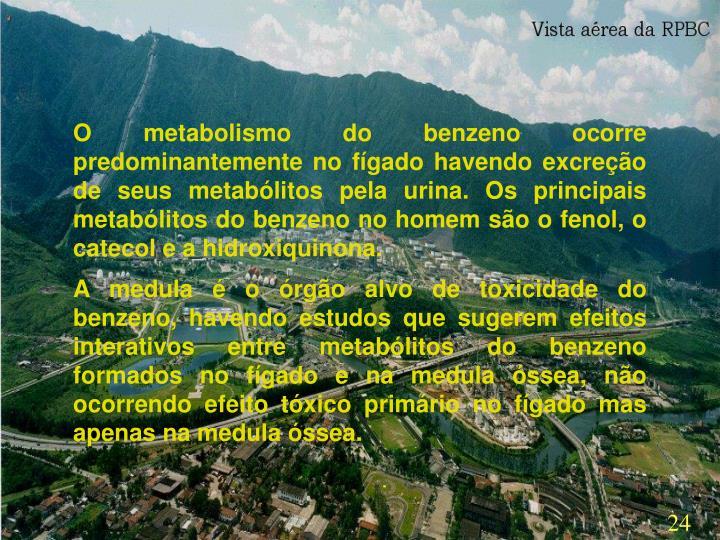 O metabolismo do benzeno ocorre predominantemente no fígado havendo excreção de seus metabólitos pela urina. Os principais metabólitos do benzeno no homem são o fenol, o catecol e a hidroxiquinona.