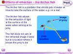 effects of refraction the archer fish