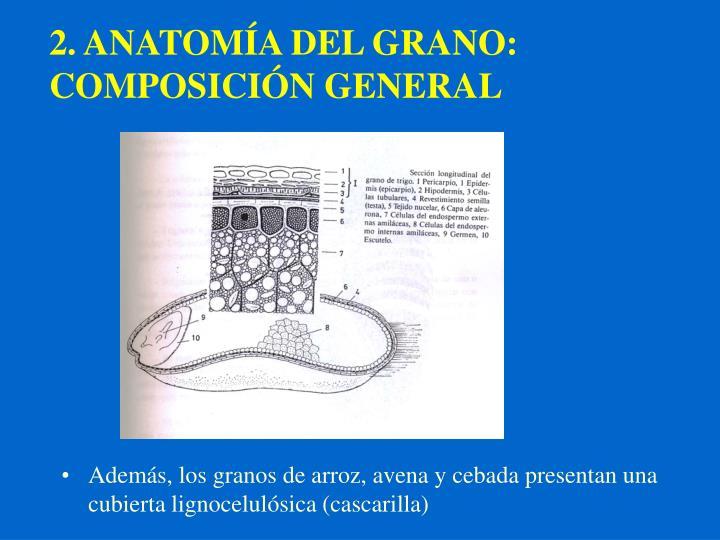 PPT - QUÍMICA DE LOS CEREALES PowerPoint Presentation - ID:1272944