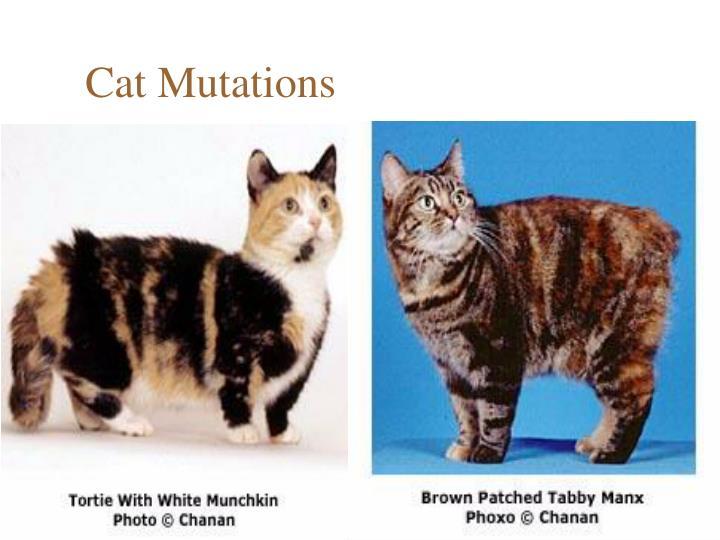 Cat Mutations