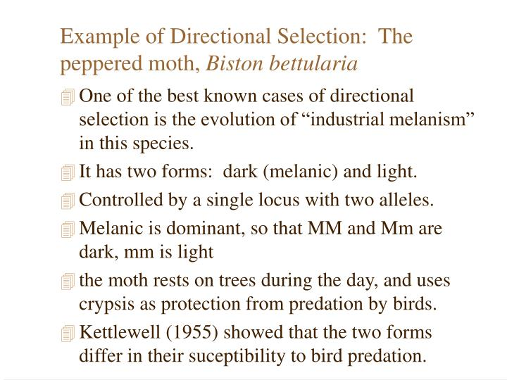 Example of Directional Selection:  The peppered moth,