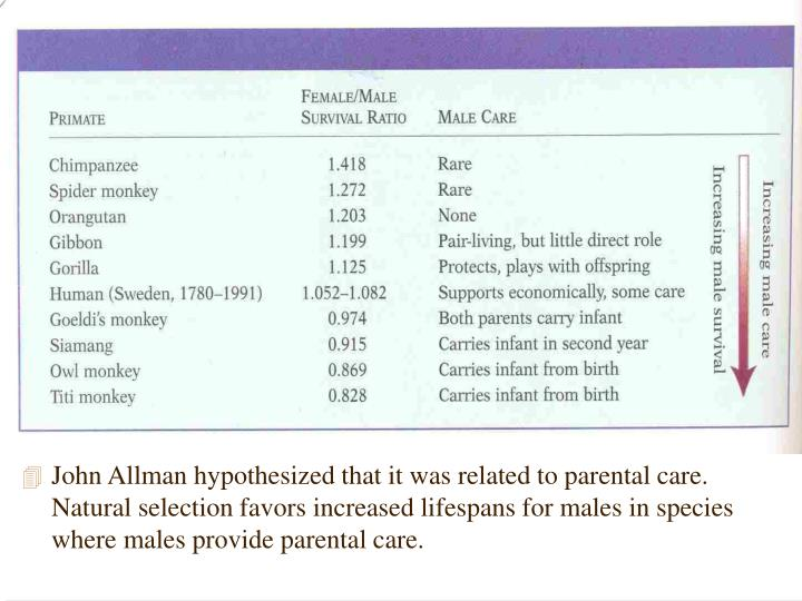 John Allman hypothesized that it was related to parental care.  Natural selection favors increased lifespans for males in species where males provide parental care.