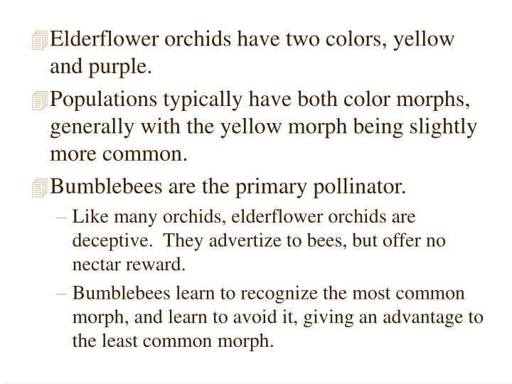 Elderflower orchids have two colors, yellow and purple.