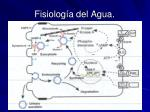 fisiolog a del agua6