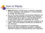 iron in plants
