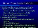 human tissue animal models