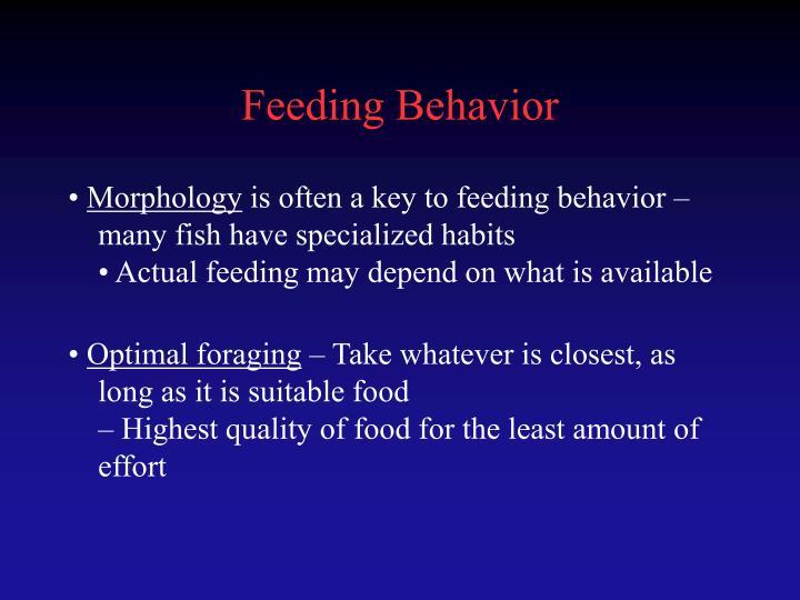 Feeding Behavior