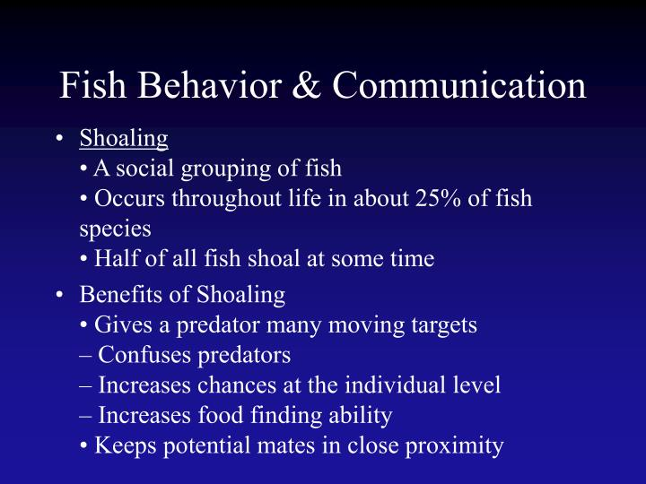 Fish Behavior & Communication