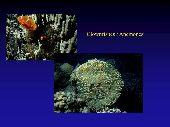 Clownfishes / Anemones