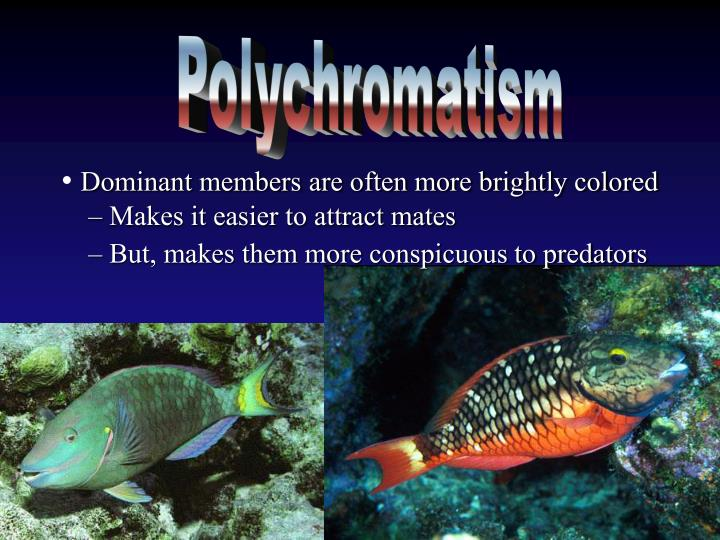 Polychromatism