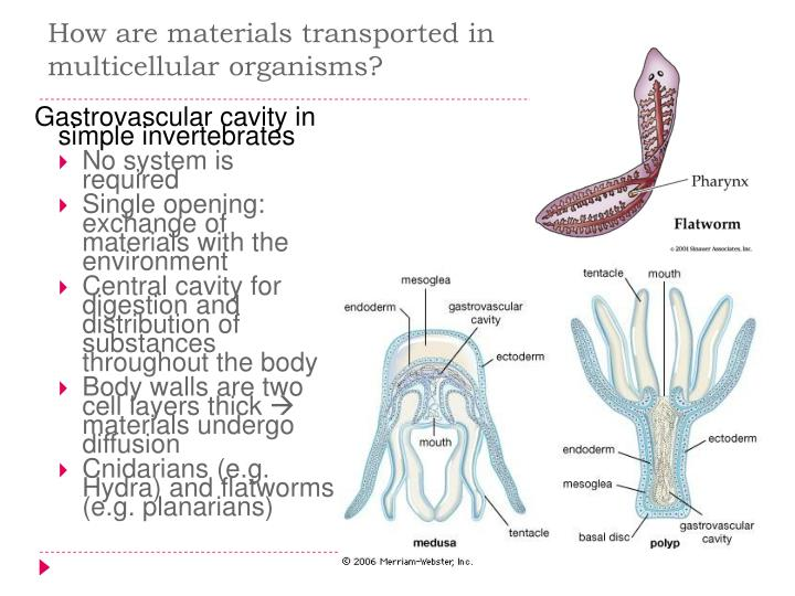 How are materials transported in