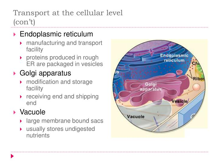Transport at the cellular level