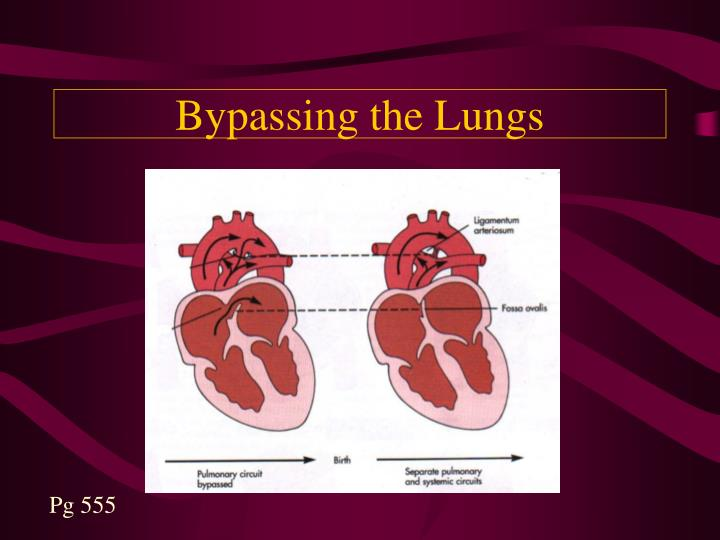 Bypassing the Lungs