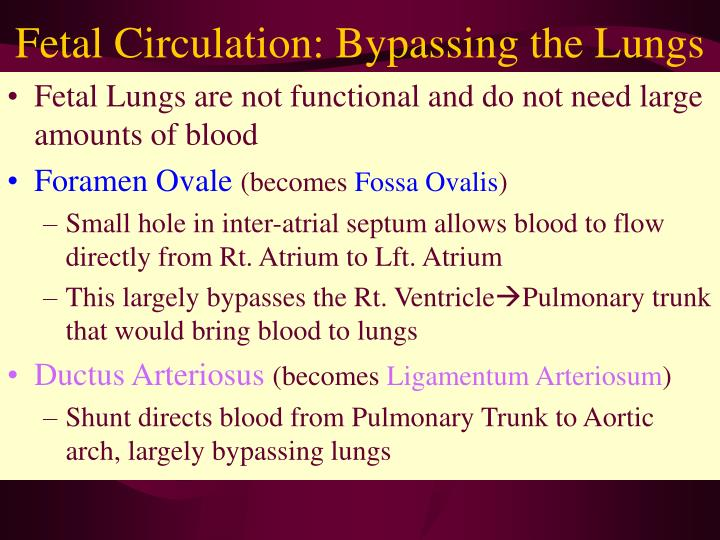Fetal Circulation: Bypassing the Lungs