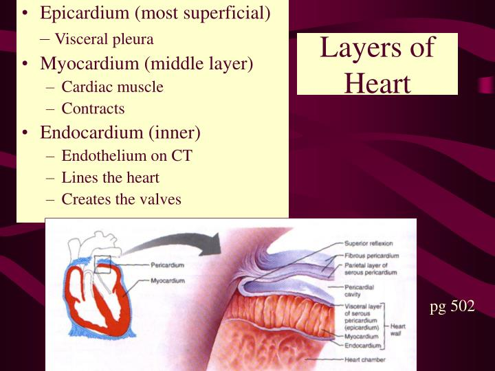 Layers of Heart